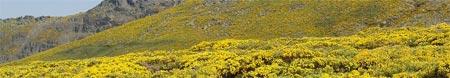 Estampa veraniega en Bejar - La Covatilla